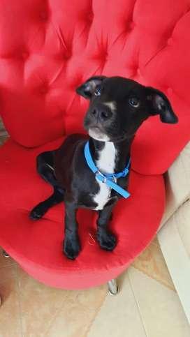 Ragnar. Hermoso cachorrito de 4 meses en adopción