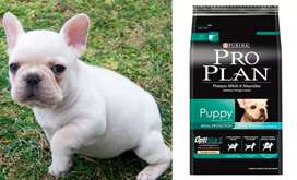 Proplan  puppy razas pequeñas
