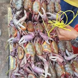 Cangrejos especiales a domicilio por atado o plancha