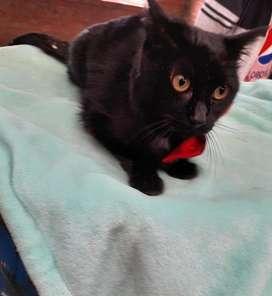 Melania. Hermosa gatica de un año en adopción
