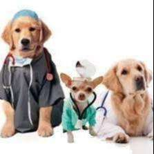 VETERINARIA SOLICITA MED VETERINARIO