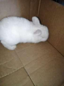 Conejos antialérgicos y cabeza de León