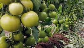 BUSCO distribuidores de Fertilizantes Agricolas