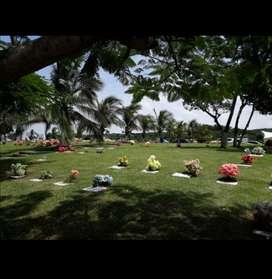 Lote Cementerio