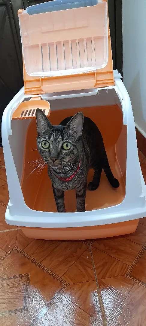 Arenero grande para gatos GATSBY con se respectiva palita y filtro de olores