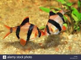 Venta de toda clase de peces