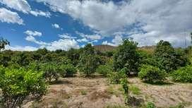 Hermoso terreno con frutales, cìtricos y otros