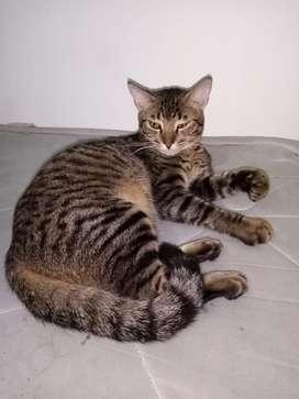 Se da en adopcion gatito de 7 meses pero se comporta como uno de 2