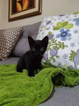 Regalo hermosas gatitas