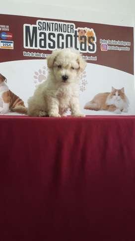 Peluches de Raza French Poodle Original