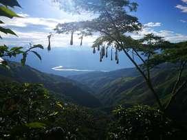 Finca de 18.000 mtr2 con casa  productora de café, revuelto y árboles frutales.(Negociable)