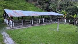 Finca para ganado,platanera, zona de árboles frutales,2nacederos. De agua  proyección turística ,paisajes maravillosos