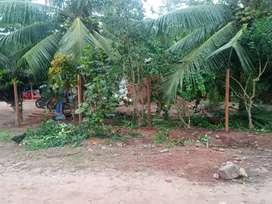 Vendo terreno - Tarapoto