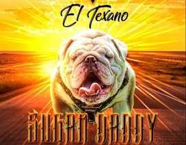 Bulldog Ingles Exotico Brinda Servicio de Monta