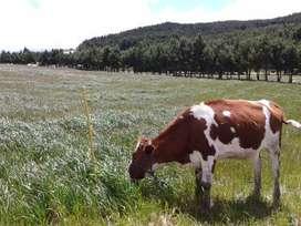 Vendo Hacienda de 24 hectáreas en la Paz Nabón