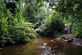 ¡OPORTUNIDAD! - FINCA 95 HECTÁREAS con vertientes de agua,  potreros y cultivos.