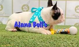 Frances. Alana Bull's