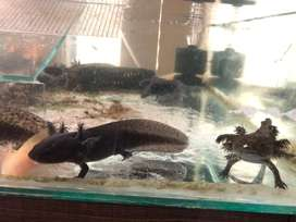 peces y más