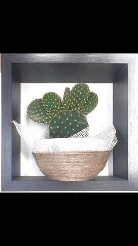 Cactus, Macetas, Regalos, plantas