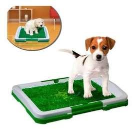 Potty patch, tapete para mascotas