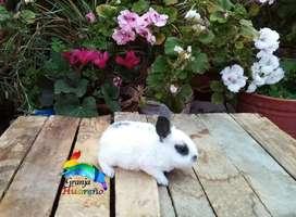 Disponemos de conejos  de raza