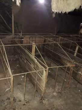 Venta de jaulas para cerdos
