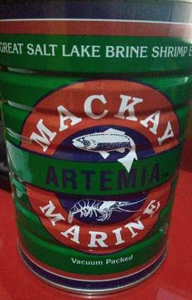 Artemia mackay