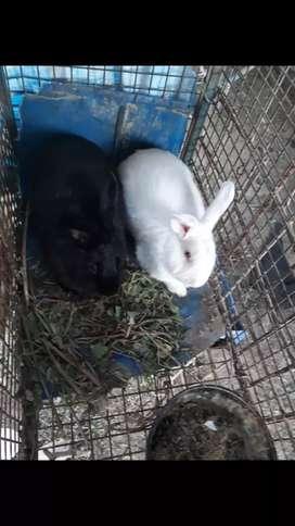 Vendo parejita de conejo