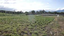 Venta de terreno en Imbaya, canton Antonio Ante, provincia Imbabura