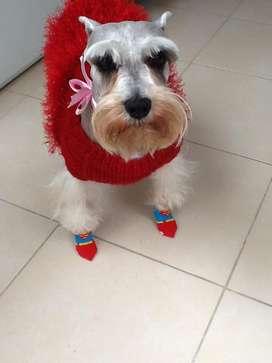 Groomer / Peluquero canino