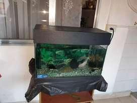 Pecera con 3 peces + más filtros y comida temporizador y mesa