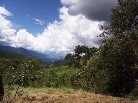 Venta de Terreno agrícola en Limabamba