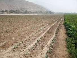 Terrenos agricola