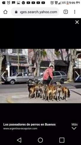 Se pasean perros por las tardes chimbote y nuevo chimbote 10 soles 2horas