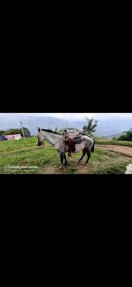 Se vende caballo ensillado