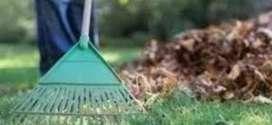 Limpieza de Patios, Jardines