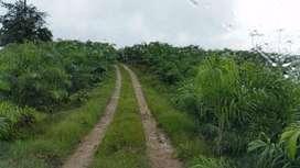 VENDO FINCA AGRICOLA 304 Ha. PEDRO V. MALDONADO