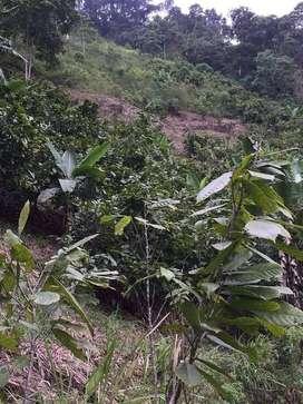 Venta de terreno con cacao