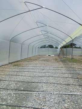 Construimos  invernaderos Metálicos Guadua en Hierro etc...