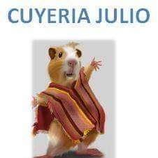 CUY CHACTAO, CUY PELADO, CUYERIA JULIO, CRIADERO SONIA