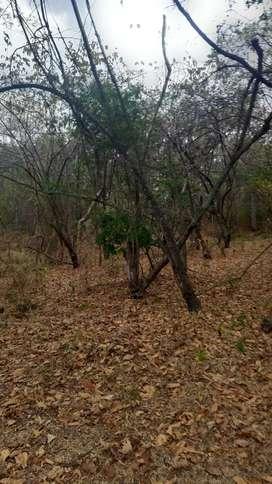Se vende 32 hectareas de terreno en pedro carbo ubicado en en valle de la virgen