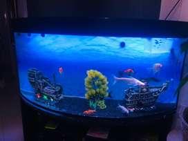 Vendo acuario curvo sump de agua dulce y acuario marino
