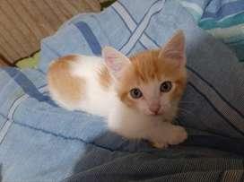 Gatos en adopcio