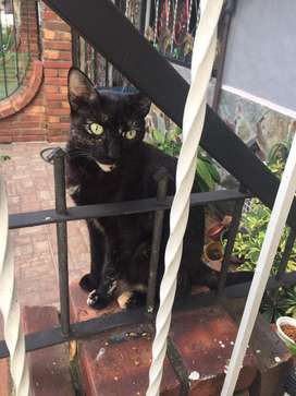 gata busca hogar