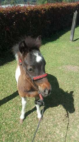 Pony...mini