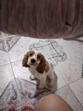 Cachorro en venta