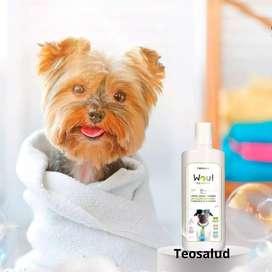 Desinfectante Antiséptico Dermatólogico De Mascotas