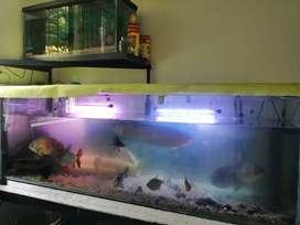 Acuario con base de dos pisos de 200x60x60 mas 100x30x60. Vendo todos los peces amazonicos