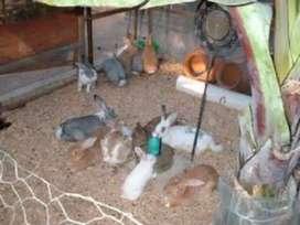 Remato conejos
