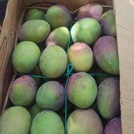 Solicito vendedores de mangos